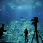 A TV crew stand in front of a aquarium at the opening in Aqua City, the new flagship marine-themed zone of the Hong Kong Ocean Park.