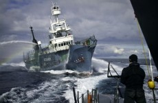 Japan temporarily halts Antarctic whaling