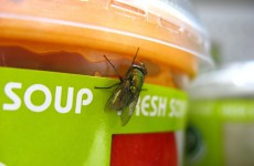 D'you want flies with that? Irish eaters find 'foreign objects' in their food