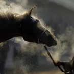 Steam rises off a horse as it gets a bath after a morning workout ahead of the Kentucky Derby.