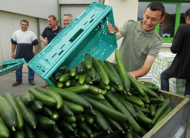 A French farm worker empties cucumbers into a container after failing to sell them due an ongoing food crisis in Europe.