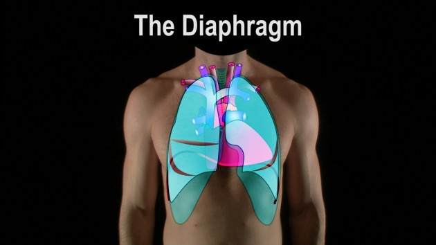 IT.Diaphragm.Lungs.Nov28.Left