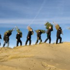 Donated Christmas trees are planted to protect the sand dunes on Formby beach in Lancashire, England. Image: Bob Collier/PA Wire