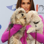 Wanna see Cindy Crawford holding two shih-tzu dogs kissing? Ask and you shall receive. 