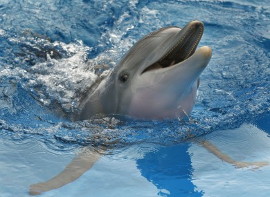 A dolphin at a public aquarium in Florida