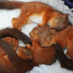 Sleepy squirrels
