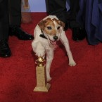 The pooch celebrates The Artist's Golden Globes win backstage in January. (AP Photo/Mark J. Terrill/PA Images)