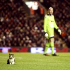 The Anfield cat interrupts Monday night's Premier League match between Liverpool and Tottenham. An internet celebrity was born.