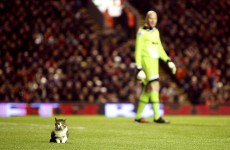 Watch: Cat interrupts Liverpool's draw with Tottenham at Anfield