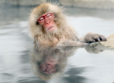 A Japanese snow monkey relaxes in a hot spring in Nagano.