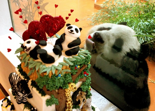 Panda cake