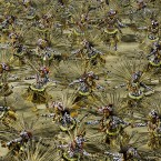 Dancers of Grande Rio samba school parade during carnival celebrations at the Sambadrome in Rio de Janeiro. (AP Photo/Victor R. Caivano)