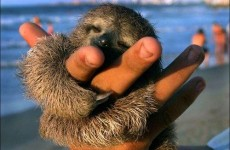 It's Friday, so here's a slideshow of sloths from around the world