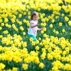 Kadie Leigh Koch amonst the daffodils in Whitley Bay.(PA Photo Owen Humphreys)