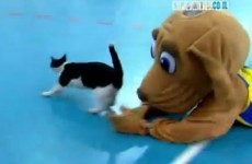 In video: Giant mascot dog chases stray cat from basketball court