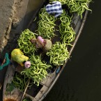 Indian farmers unload cucumbers from a boat as they take them to market in Allahabad,northern India.(AP Photo/Rajesh Kumar Singh)