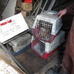 The ISPCA rescued a number of dogs from the location. 