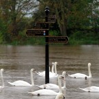 Swans swim past a sign for direction for riverside walks in Worcester. Tuesday May 1st 2012.