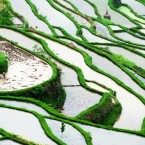(CHINA OUT) Terraced paddy fields are seen at an altitude of 1200 metres on May 7, 2012 in Jinping County, Guizhou Province of China. (Photo by Yang Wenbin/ChinaFotoPress)***_***427726999