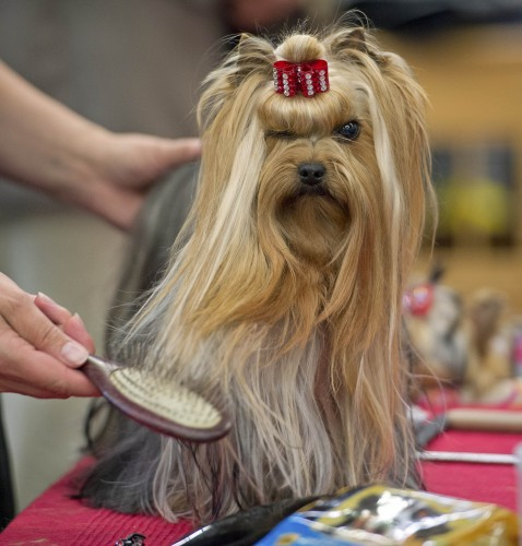 Germany Dog Show