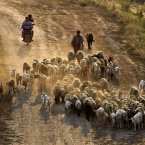 A shepherd directs his sheep and goats on a dirt road at sunset outside Bucharest, Romania. (AP Photo/Vadim Ghirda)
