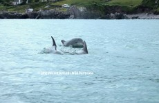 VIDEO: Cute clip of the day – dolphins having a chat