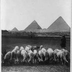 A rural scene taken before 1924. All of the images of Cairo from the Carpenter Collection were taken between 1890 and 1923. (Library of Congress, Prints & Photographs Division)