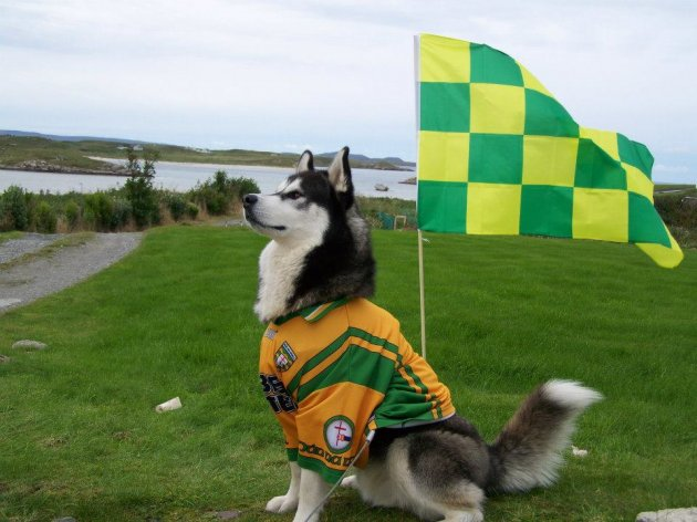 donegal dog