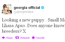 Tweet Sweeper: Georgia Salpa is looking for a new puppy