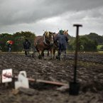 The under-40 Horse Plough Class Category at the National Ploughing Championships. Photo: Julien Behal/PA Wire