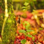 Photo: PA