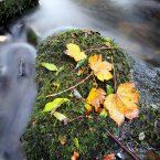 Autumn leaves are seen in the Glenarm River in Co Antrim, as the autumnal weather continues. (PA)