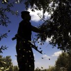 A Palestinian security officer helps farmers pick olives during the harvest season, in the northern West Bank village of Maythaloon.  (AP Photo/Mohammed Ballas)