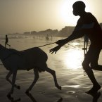 A boy chases a ram into the Atlantic Ocean as residents wash their sheep before sacrifice, in preparation for the Eid al-Adha feast in Dakar, Senegal. The Eid al-Adha festival, known locally as Tabaski, celebrates Abraham's willingness to sacrifice his son. (AP Photo/Rebecca Blackwell)