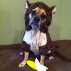 This dog thinks he can outsmart winter by dressing as a monkey. He'll have to find out the hard way. (Pets Adviser/Flickr)