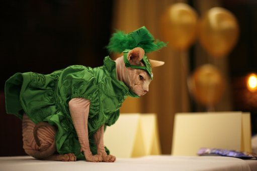 APTOPIX FELINE FASHION SHOW