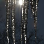 Icicles shine in the morning sun in Lawrence, Kan. The condition of the Kansas winter wheat crop has deteriorated in the wake of December's limited rain and snow. (AP Photo/Orlin Wagner)