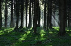 Sale of Irish forest 'cannot be justified' on economic grounds