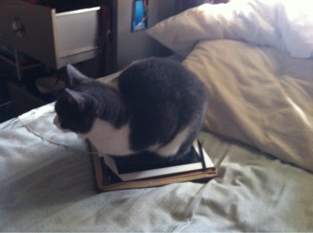 catipad