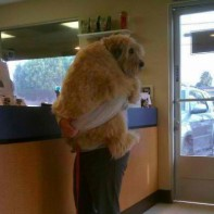 16 reasons why dogs should be held like babies