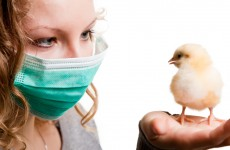 Uh-oh: UN says it's impossible to predict spread of new bird flu